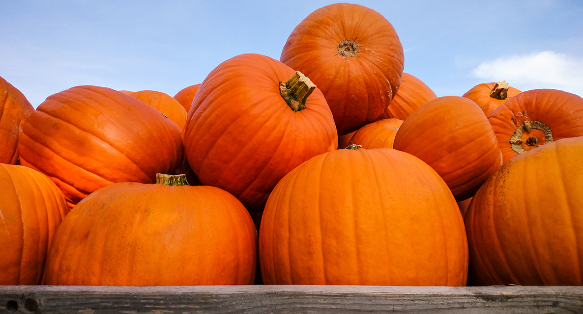 What's in Season: Pumpkins