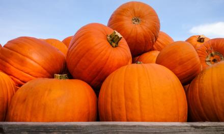 What's in Season: Pumpkins