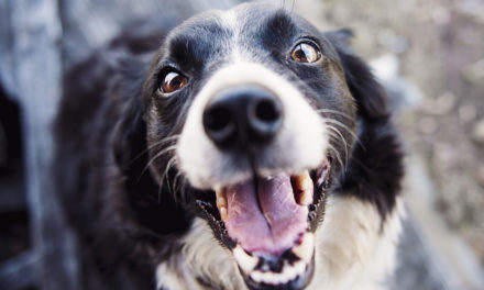 Is Owning a Dog Good for Your Heart?