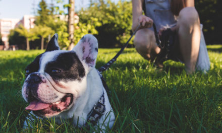 7 Awesome Reasons to Walk Your Dog